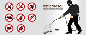 Pest Contro Service In Dhaka